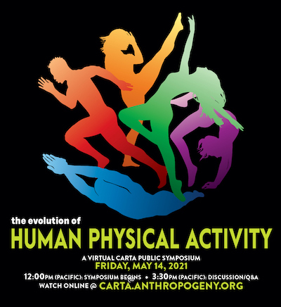 The Evolution of Human Physical Activity
