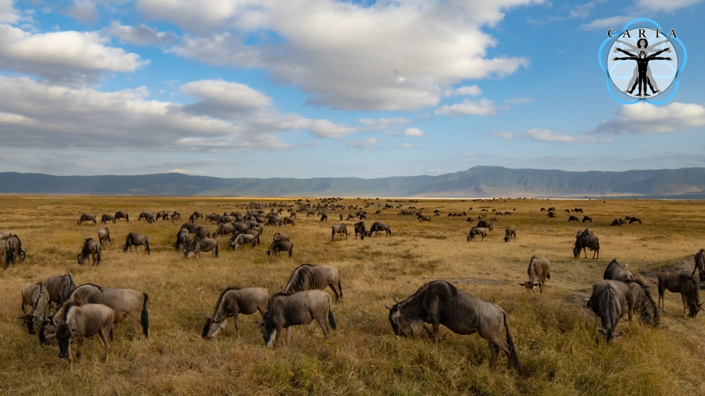 Location: Ngorongoro Conservation Area, Tanzania. Photo credit: Linda Nelson.